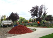 Lots of mulch to spread around