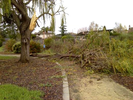 Weep for our Willow Tree (2/4)
