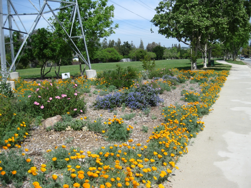 Going Native Garden Tour visitors enjoy our parks (2/6)