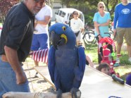 Gordon the Parrot