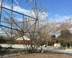 before Mimosa tree undertower