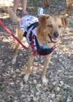 hop-dog-parade-contest_092416-169