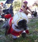 hop-dog-parade-contest_092416-24