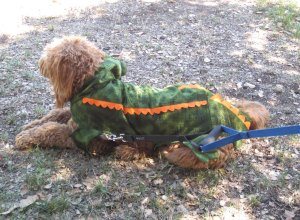 Alligator Dog took 2nd place in the large dog division