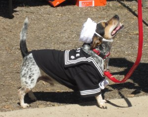Popeye The Sailor Man took 2nd place in small dogs